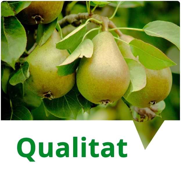 Obtenim la millor qualitat de fruita i cereal